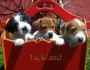 pups-for-sale
